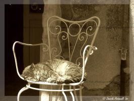 Sleeping kitty by TVD-Photography