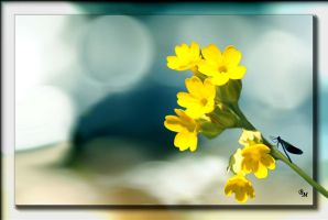 Spring time 02 by rembrantt