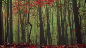 Scarlet fall among the trees by kriskeleris