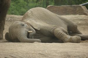 Baby Elephant by WoodenOx