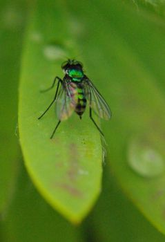 tinyfly by ifly352