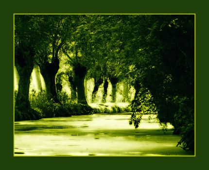 A Mystic Forest by Djou-L