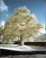 Snow Tree by neoxavier