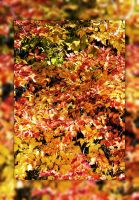 Autumn Bliss by Joe-Lynn-Design