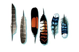 Feathers Feathers by lostie815
