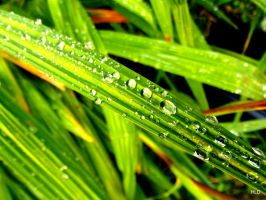 More fascinating raindrops! by HannahLD