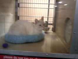 petsmart spring hill tn catof the day 1/2/13 by michelous