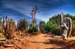 Cactus Country (Strathmerton, Vic) by djzontheball