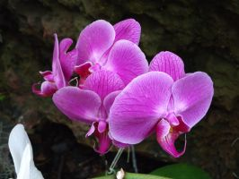 More Orchids by Cougar28