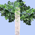 A fractal tree  all JWildfire by snicker02