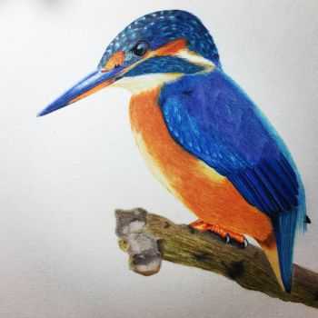 Kingfisher Complete  by theartgearguide