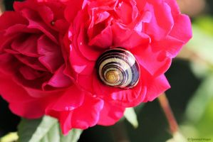 Snail Roses by SpawnedImages