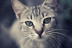 Buddy -The Cat- by photographygrl