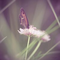 Butterfly (2) by Smaragdi