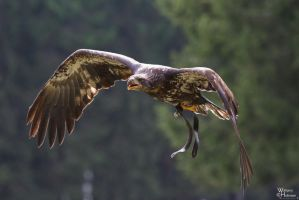 2010-178 An eagle called eagle by W0LLE