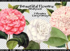 Flowers PNG by Yannettee