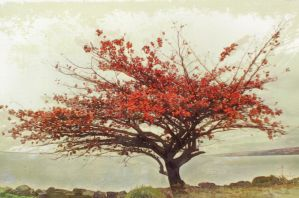 Red Tree by SamiraEmelie