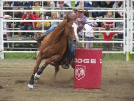 Rodeo Horse Stock 16 by horsecrazycool