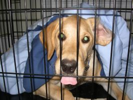 Archie caged by EbolaBearVomit
