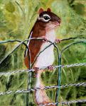 Chipmunk by WendyMitchell