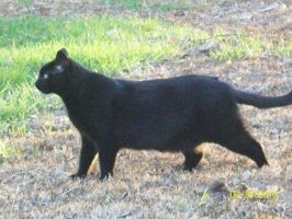 Little Panther by TheTweedleTwins