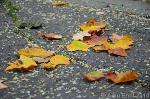 first signs of autumn by albuemil