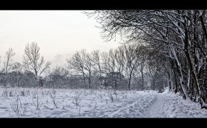 Winterfield by filth666