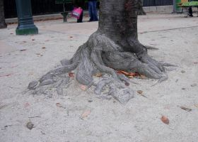 545 - sandy roots by WolfC-Stock