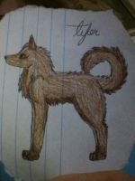 dog for tyler by cocobeanc