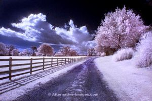 Infra Red Landscape by Alt-Images