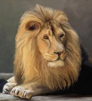 Lion by Bumblewales