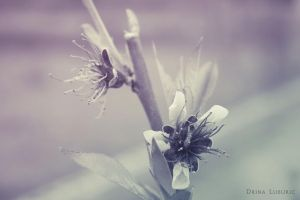 Inert Nature by Drii-a7x