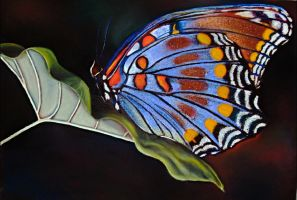 Leaf and Butterfly by znkf0908