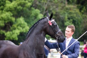 STOCK - Friesian Show 2012-72 by fillyrox