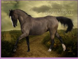 Blackfoot by oceancoralgraphics