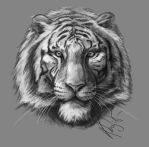 Tiger head (sketch of the game slots) by KhajiitSawyer