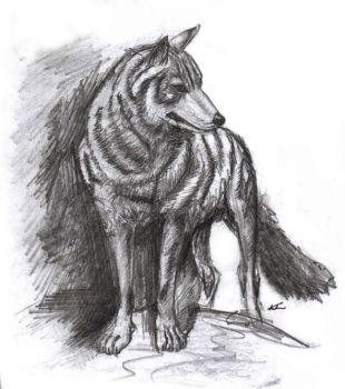 Sketch of A Wolf by halcyondf