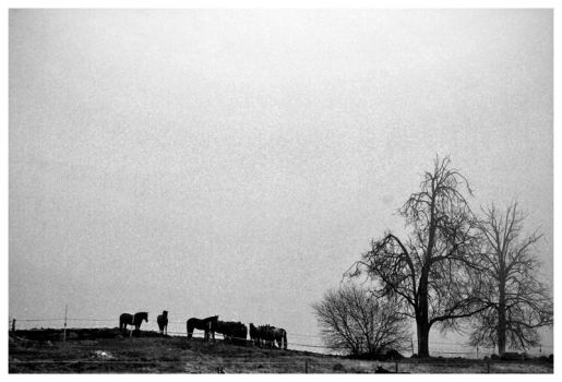 Horses in hill by jaggo