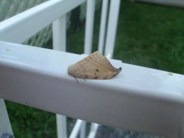 Moth pic by spagetti-sauce