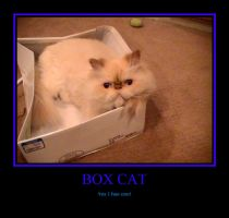 Box Cat by LeonKSpiderKitty