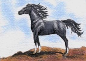 Gray Arabian ACEO by calzephyr