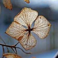 lucky leaf by augenweide