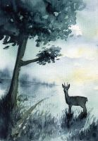 Early hours - Roe deer by doma22