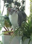 My cat:Maya by abyss1956