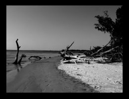Driftwood Beach1 by sees2moons