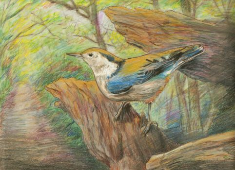 Spring Nuthatch by springartist