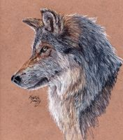 Grey Wolf by KristynJanelle