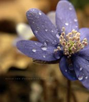 After rain by Rosse-San
