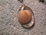 Sea shell necklace detail by Fallonkyra