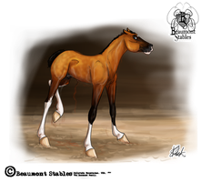 BS Shae -foal- by Baringa-of-the-Wind